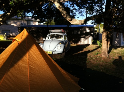 camp site at agnes waters under the fig tree