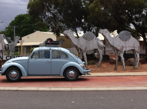 have departed esperance and arrive at norseman- getting followed by a few camels