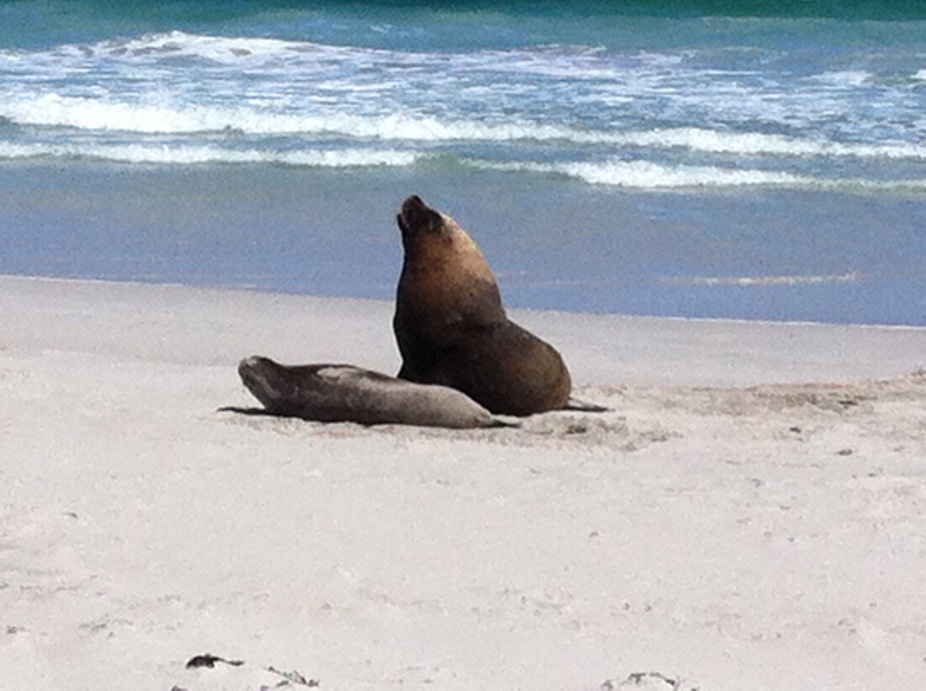a sea lion and a seal doing the wild thing- who ha