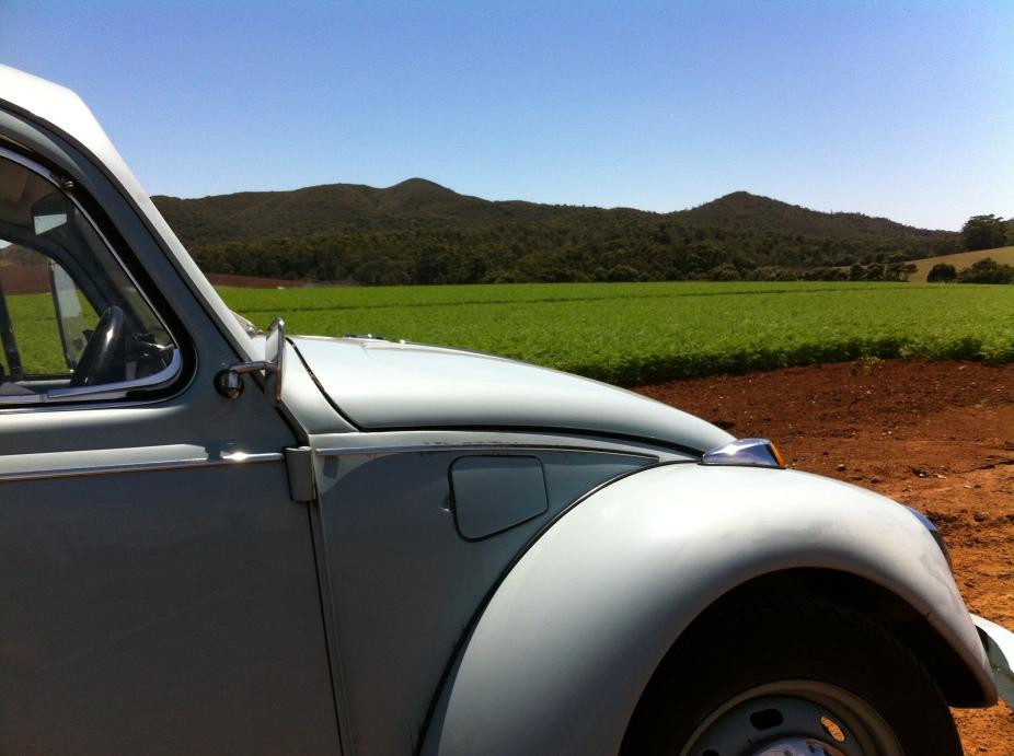 a short cut through the carrot fields