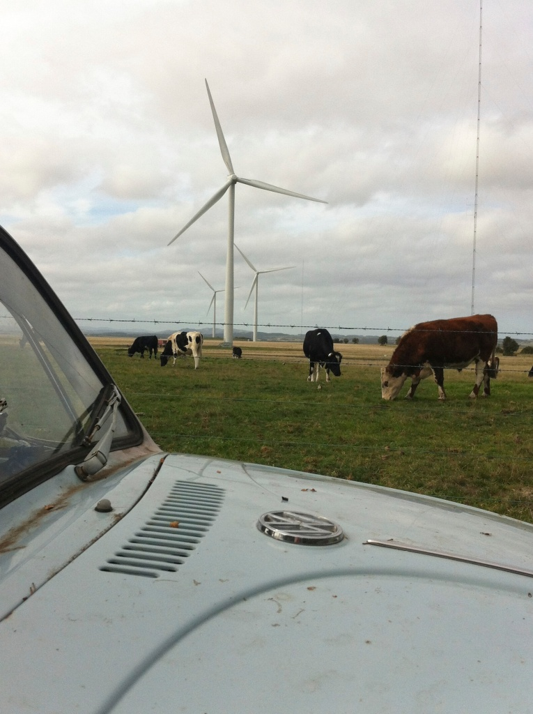 cows farting by keeping the wind towers going